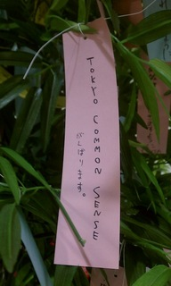2013_Tanabata.jpg