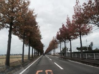 Fukui2013_1.JPG