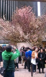 Sakura Project1.jpg