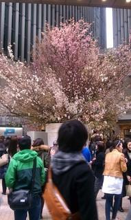 Sakura Project2.jpg