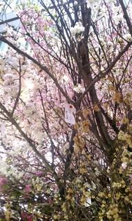 Sakura Project7.jpg