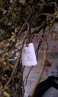 Sakura Project8.jpg