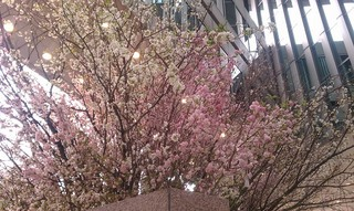 Sakura Project9.jpg